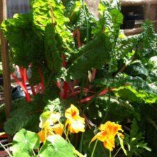 Gardening Club Clone